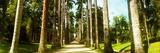 Trees Both Sides of a Garden Path, Jardim Botanico, Zona Sul, Rio De Janeiro, Brazil Photographic Print
