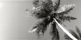Low Angle View of Palm Trees, Morro De Sao Paulo, Tinhare, Cairu, Bahia, Brazil Papier Photo