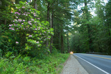 Redwood Trees and Rhododendron Flowers in a Forest, U.S. Route 199, Del Norte County Photographic Print by Green Light Collection