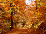 Trees at Huelgoat Forest in Autumn, Finistere, Brittany, France Photographic Print by Green Light Collection