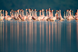 Lesser Flamingos (Phoenicopterus Minor) in a Lake, Lake Nakuru, Lake Nakuru National Park, Kenya Photographic Print by Green Light Collection