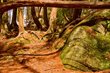 Trail in a Forest, Muskoka, Ontario, Canada Photographic Print by Green Light Collection