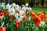 Tulips and Other Flowers at Sherwood Gardens, Baltimore, Maryland, USA Photographic Print by Green Light Collection
