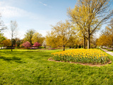 Flowers with Trees at Sherwood Gardens, Baltimore, Maryland, USA Photographic Print by Green Light Collection