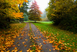 Fallen Leaves on a Road, Washington State, USA Photographic Print by Green Light Collection