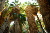 Low Angle View of Palm Trees, Palm Springs, Riverside County, California, USA Photographic Print by Green Light Collection