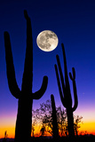 Moon over Saguaro Cactus (Carnegiea Gigantea), Tucson, Pima County, Arizona, USA Photographic Print by Green Light Collection