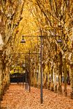 Esplanade Des Quinconces Park in Autumn, Bordeaux, Gironde, Aquitaine, France Photographic Print by Green Light Collection