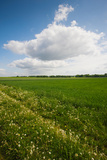 Farm Field in Springtime, Bergen, Lower Saxony, Germany Photographic Print by Green Light Collection