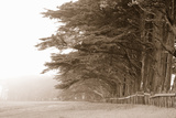 Cypress Trees Along a Farm, Fort Bragg, California, USA Photographic Print by Green Light Collection