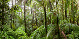 Trees in Tropical Rainforest, Eungella National Park, Mackay, Queensland, Australia Fotografisk tryk af Green Light Collection