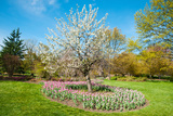Tulips at Sherwood Gardens, Baltimore, Maryland, USA Photographic Print by Green Light Collection