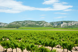 Vineyards with Hills in the Background, Alpilles, Route D'Orgon, Eyguieres, Bouches-Du-Rhone Photographic Print by Green Light Collection