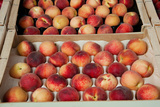 Peaches at a Market Stall, Lourmarin, Vaucluse, Provence-Alpes-Cote D'Azur, France Photographic Print by Green Light Collection