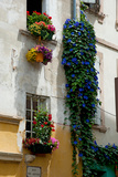 Building with Flower Pots on Each Window, Rue Des Arenes, Arles, Bouches-Du-Rhone Photographic Print by Green Light Collection