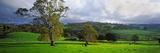 Trees on a Hill, Macclesfield, Adelaide Hills, South Australia, Australia Photographic Print