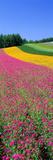 Field of Flowers Nakafurano Hokkaido Japan Photographic Print