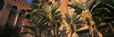 Low Angle View of Palm Trees, Moore Hall, University of California, Los Angeles, California, USA Photographic Print