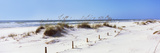 Tall Grass on the Beach, Perdido Key Area, Gulf Islands National Seashore, Pensacola, Florida, USA Photographic Print