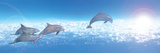 Dolphin Leaping in Air Photographic Print