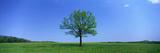 Lone Tree in Pasture Near Dijon France Photographic Print