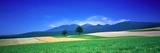 Farm Fields (Furano) Hokkaido Japan Photographic Print