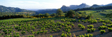 Vineyard Dentelles De Montmirail Vaucluse Provence France Photographic Print