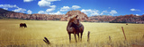 Horses Grazing in a Meadow, Kolob Reservoir, Utah, USA Photographic Print
