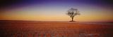 Tree Yorkshire England Photographic Print