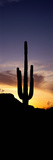 Saguaro Cactus and Sunset Saguaro National Park Arizona USA Photographic Print