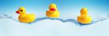 Three Ducks on Water Fotografie-Druck