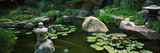 Lilies in a Pond at Japanese Garden, University of California, Los Angeles, California, USA Photographic Print