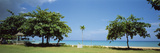 Trees on the Beach, Ocho Rios, St. Ann, Jamaica Photographic Print