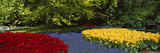 Flowers in a Garden, Keukenhof Gardens, Lisse, Netherlands Photographic Print