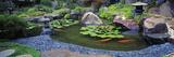 Lotus Blossoms, Japanese Garden, University of California, Los Angeles, California, USA Photographic Print