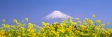 Mt Fuji Shizuoka Japan Photographic Print