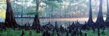 Usa, Florida, Cypress Swamp Photographic Print