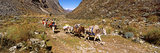Tourists with Mules Carrying Loads in a Valley, Machu Picchu, Cusco Region, Peru, South America Photographic Print