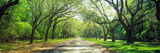 Live Oaks and Spanish Moss Wormsloe State Historic Site Savannah Ga Reproduction photographique