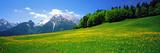 Springtime Bavarian Alps Germany Fotografie-Druck