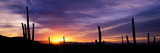 Desert Sunset Saguaro National Park Az Photographic Print
