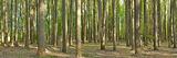 Forest, Washington Crossing State Park, Pennsylvania, USA Photographic Print
