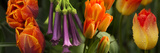 Close-Up of Orange and Purple Flowers Photographic Print