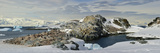 Chinstrap Penguin (Pygoscelis Antarctica) Colony on Hydrurga Rocks, Antarctic Peninsula Photographic Print