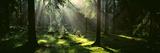 Forest Uppland Sweden Fotografisk tryk