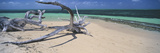Driftwood on the Beach, Green Island, Great Barrier Reef, Queensland, Australia Photographic Print
