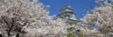 Himeji Castle Hyogo Japan Photographic Print
