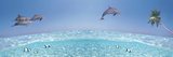 Dolphins Leaping in Air Photographic Print