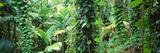Vegetation Seychelles Fotodruck