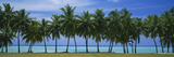 Palms and Lagoon Aitutaki Cook Islands Photographic Print